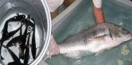 Acvacultura - Pescuit