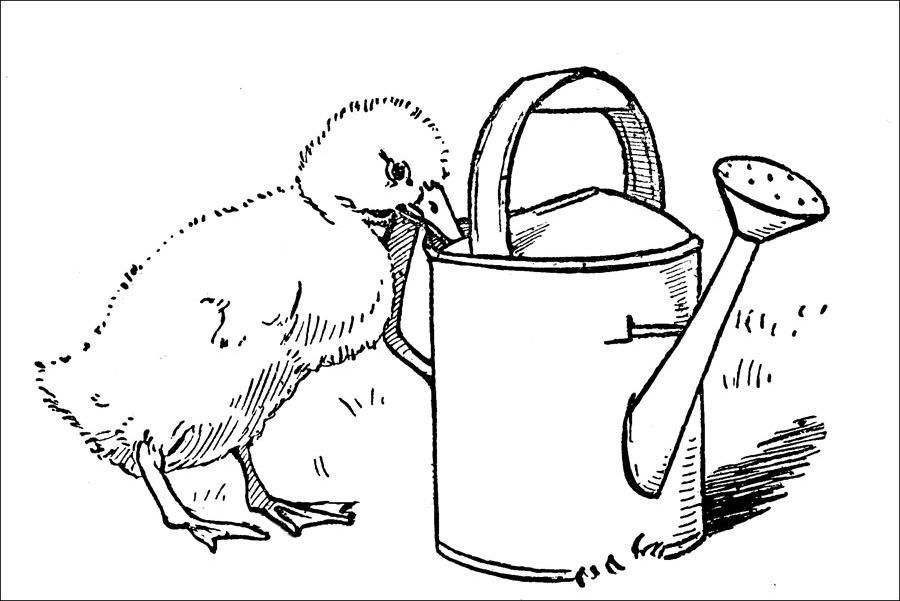Puiul insetat