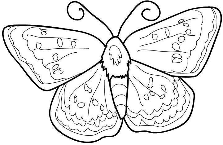 Fluturi de colorat - plansa 2