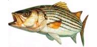 Noi reguli privind pescuitul in Delta Dunarii